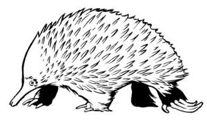 Spiny Echidna by ColbyBluth