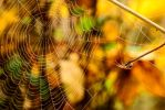 autumn spider's web by fot-ciosek
