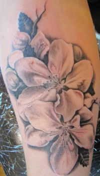 Apple flowers by ThePinkTattoo