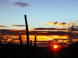 SaguaroSunset by wonenownlee