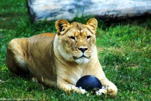 Just try to take my ball. by Riphath