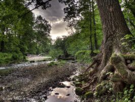 Trout Stream by abstractcamera