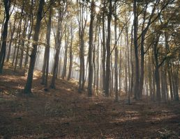 Forest Stock III. by ChristinaIsabella