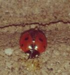 Ladybug by lalliphotography