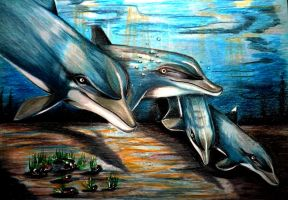 dolphins by PinkaArt