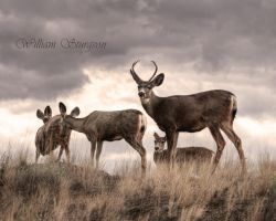 Deer 1 by Ironwi11