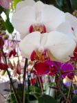 Red and White Orchid by shadowhawk6776