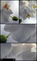 ORCHID_study by meggert