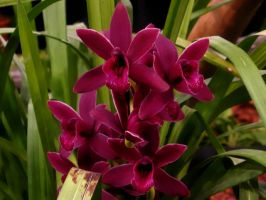Orchid Series 4 by Formel