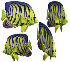 Angel Fish PNG Stock by Roys-Art