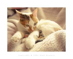 Cat 4 by eyadness