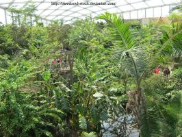 Indoor tropical rainforest 01 by Bloodsoul-Stock