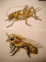 Bee and Cricket by FinchFight