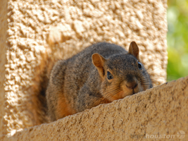 Monorail Squirrel by ravenn22