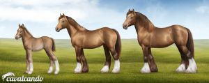 Gypsy Vanner. Stages of growth by Chistokrovka