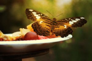 Fruit Feast for a Butterfly by Lydia-distracted