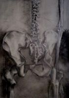 skeleton study. by amism
