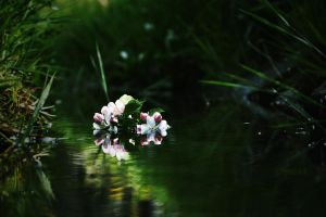Flower On Water... by loker90