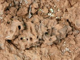 Close up of an anthill by SiradLah