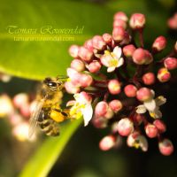 Collecting Bee by TammyPhotography