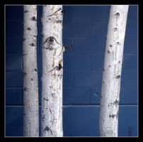Bark on Blue by mymamiya