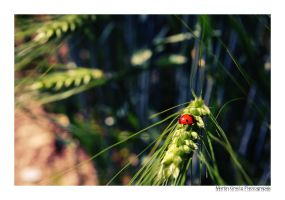 Ladybug's World by MCG0603