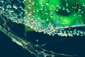 Web by ButterflyImage
