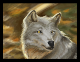 Wolf - 2 hour Challenge by Sara-Mapes