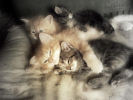 --kittens by Painted-Spirit