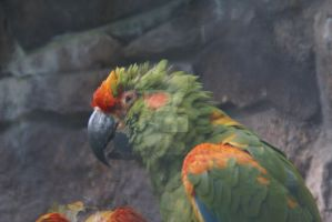 Parrot by Hetti-Photograph