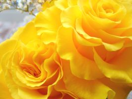 Yellow roses by Anca-4