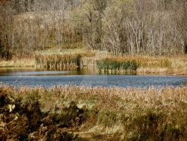 Reeds and Ponds by bohemiandog