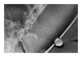 Feather Study 6 by badman22
