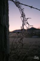 Barbed by FrostAvy