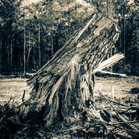 Stump by mikeheer