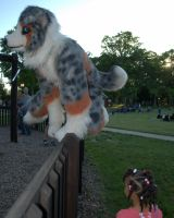 Hopping the fence by Tychoaussie