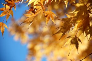 autumn leaves 5 by 980256
