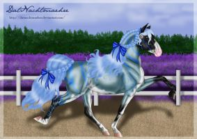 Colseya's first competition by DatNachtmaehre