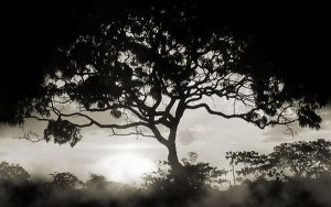 Tree Mist by PSRADICH