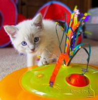 Wanna play? by Snappy-Cat-Images