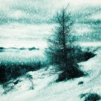 Winter with snow and tree by mugurelm