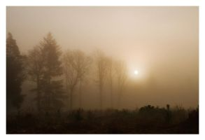 Mist In The New Forest by Neutron2K