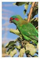 Parrot CRW_5296-01 by Dyer-Consequences
