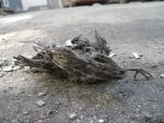 Dead bird 4 by Panopticon-Stock