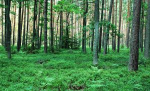 Buda Tuszowska forests in July by lesnydrwal
