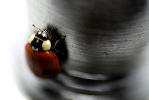 Ladybird 2 by petarda18