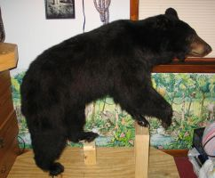BLACK BEAR IN MY ROOM by Zhon