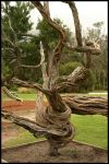 twisted tree by dvandamme