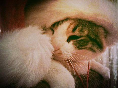 Christmas Kitty by EpicCatLover
