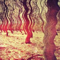 Trippy Forest by molzography